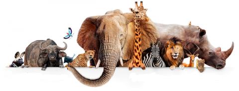 Зоология - курсовые, контрольные на заказ