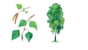 Ботаника - курсовые, дипломные