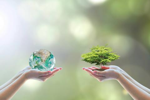 Экология - заказать дипломные, курсовые